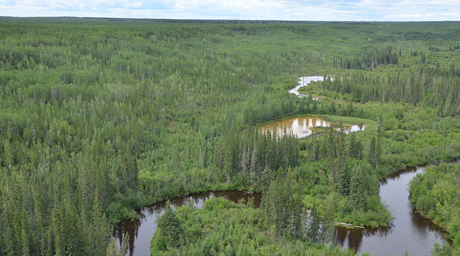 alberta boreal forest