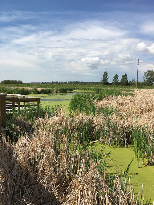 lois hole provincial park, big lake, st. albert, alberta